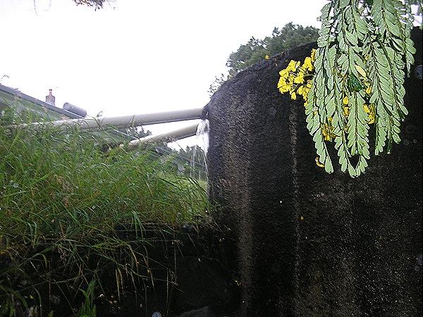 JAMIESONS 26 JAN 2008 004