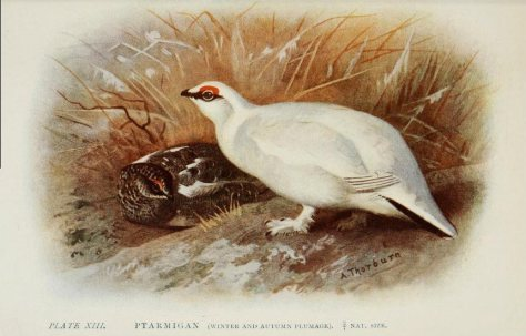 1 1 1 1 1 1 britishbirds00huds_0317