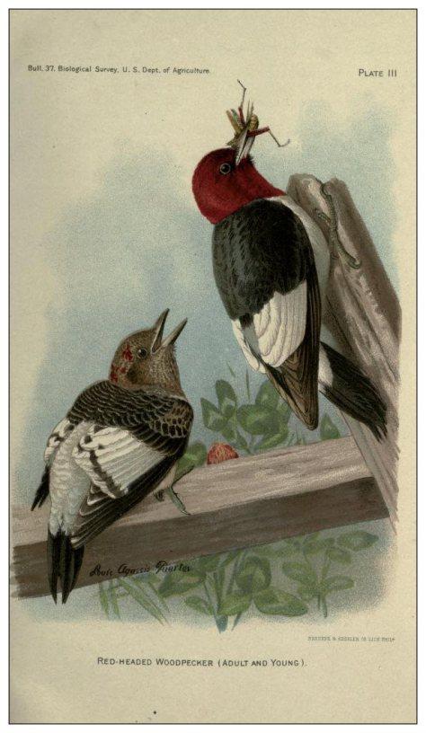 2 birdsmiscellaneo00sealrich_0051