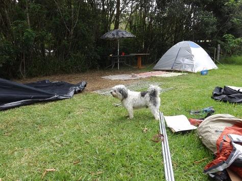 1-scoob-tents