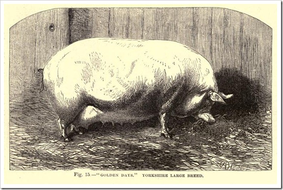 "NOVEMBER 22 2017 : ""At one point, as Samuel urges Adam to raise his boys well regardless of the blood that might be in them, Adam tells him, ""You can't make a race horse of a pig."" Samuel replies, ""No, but you can make a very fast pig."" John Steinbeck, East of Eden"