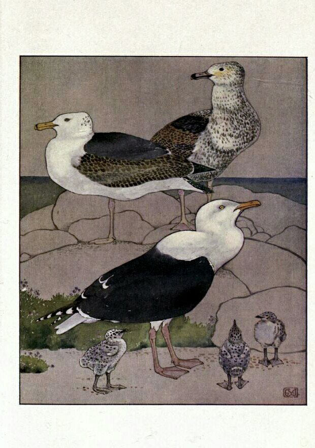 THE GEM 18 AUGUST 2018 : RICHES: A DREAM IN THE NIGHT. FAME: A GULL FLOATING ON WATER.