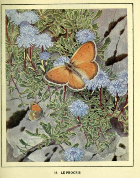 "THE GEM 18 NOV 2018 : ""A FLOWER KNOWS, WHEN ITS BUTTERFLY WILL RETURN, AND IF THE MOON WALKS OUT, THE SKY WILL UNDERSTAND; BUT NOW IT HURTS, TO WATCH YOU LEAVE SO SOON, WHEN I DON'T KNOW, IF YOU WILL EVER COME BACK."" ― SANOBER KHAN"